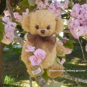 画像3: 2019年夏の新作☆ メリーソート【ウィットニー限定】チーキータビー  24cm