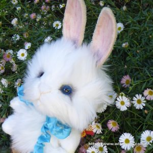 画像3: 2021年新作☆ クレメンス社  ウサギのウィルコ 18cm   12番